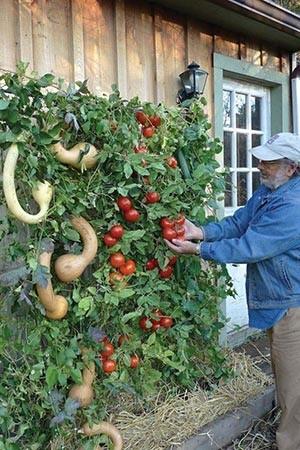 Potager 11 monde 3 0 for Garden idea ht 450