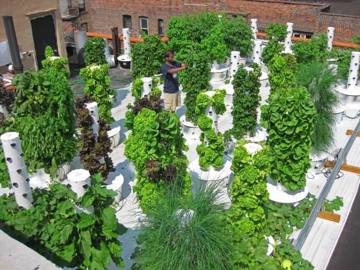 Solutions pour produire fruits et l gumes partout et tout for Jardin hydroponique